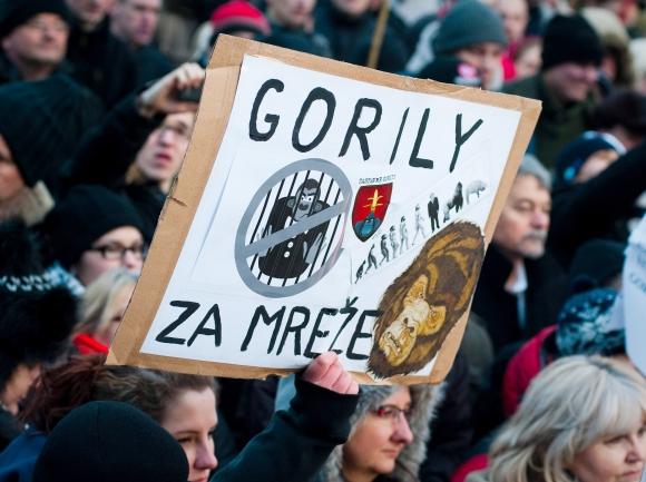 protest-gorila-iii