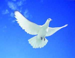 holubica-na-oblohe